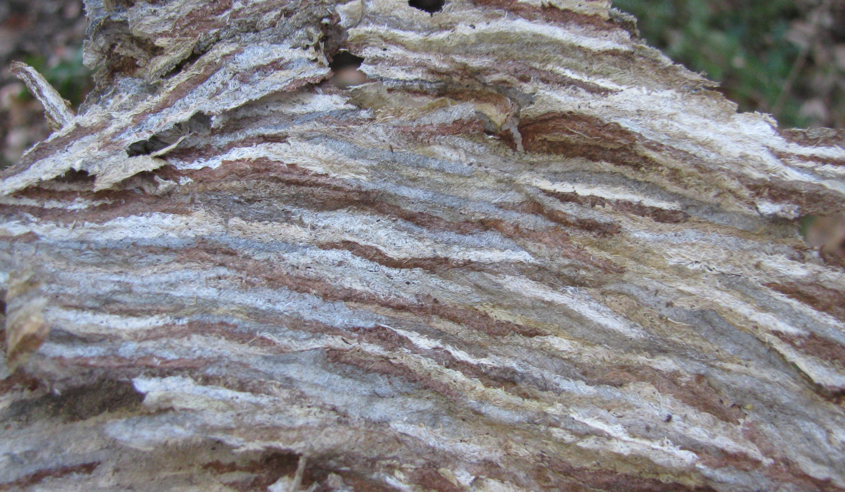 close-up of Bald-faced Hornet Nest